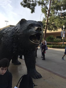 The Bruin bear at UCLA